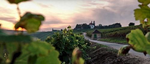 blogpic_german_wine