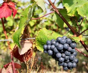 blogpic_wines_of_vendomoise