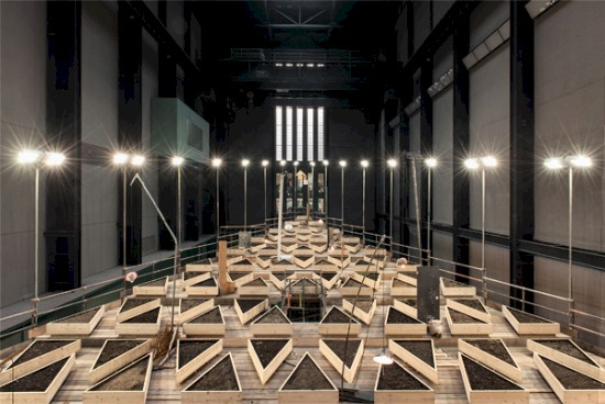 blogpic_growing_in_turbine_hall